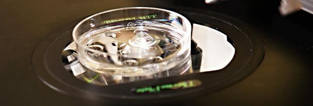 технология экстракорпорального оплодотворения