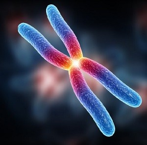 как передаются гены человека ребенку