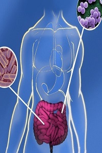 бактерии человека