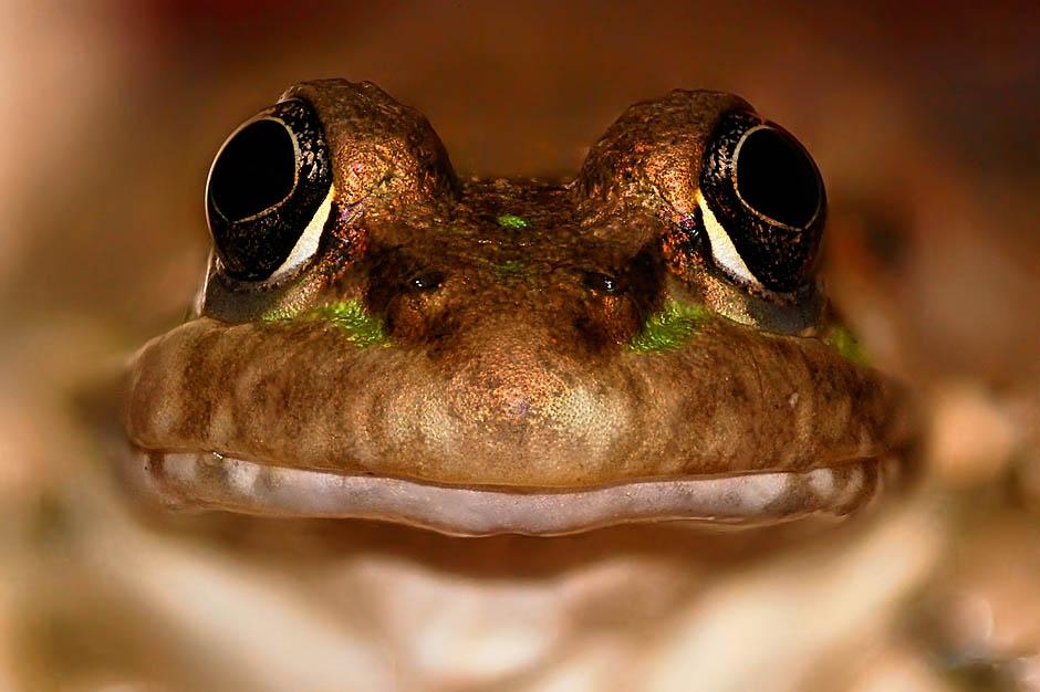 1014 Несколько фактов о лягушках