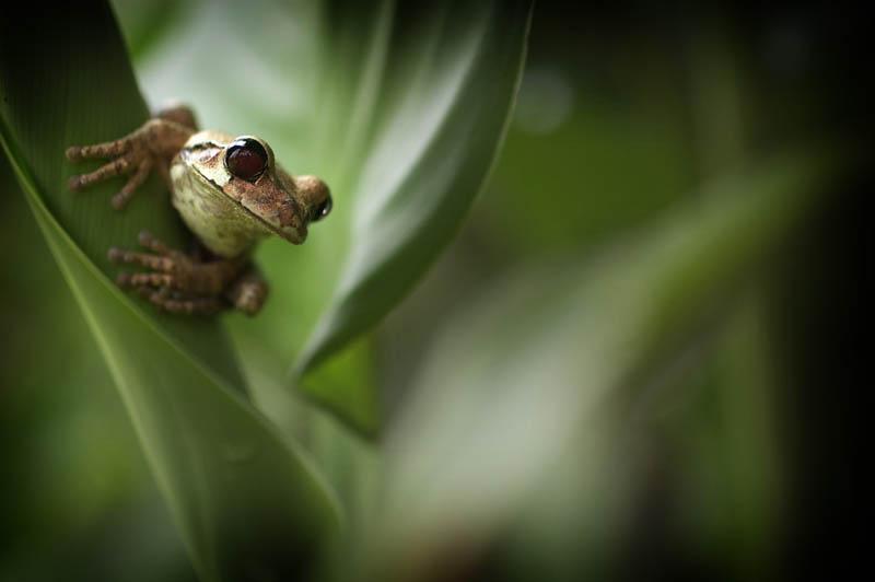 1511 Несколько фактов о лягушках