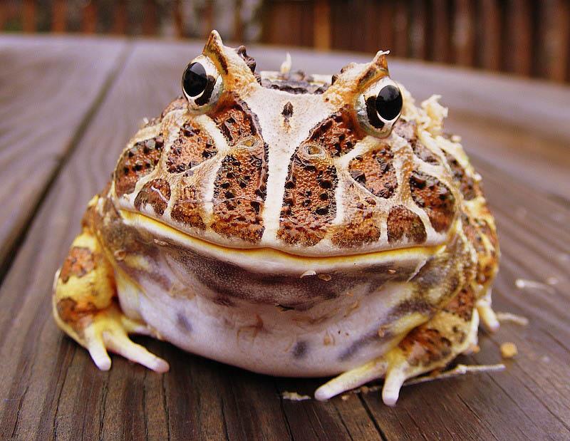 324 Несколько фактов о лягушках