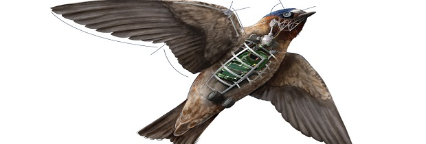 дроны и птицы