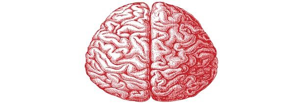 как выглядит головной мозг