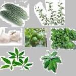 сколько растений всего