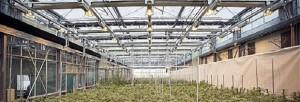 лекарства из растений
