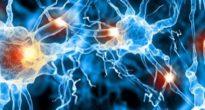 Нервные клетки мозга человека восстанавливаются или нет