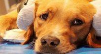 Понимает ли собака человеческую речь хозяина