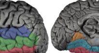 Форма организации типов памяти мозга человека