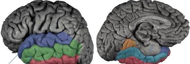 виды памяти у человека