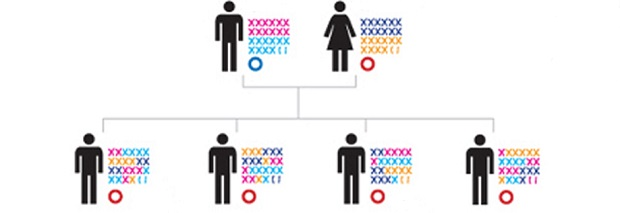 генофонд человека