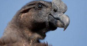 сколько лет живут птицы