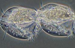 Сколько живут бактерии