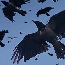 как долго живут птицы