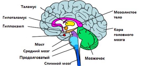 Нейрофизиология