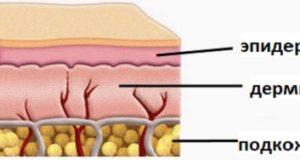 функции кожи человека