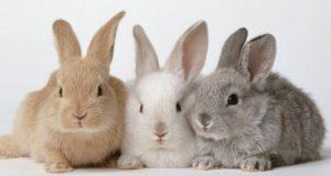 Какое животное живет меньше всех