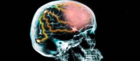 про мозг человека