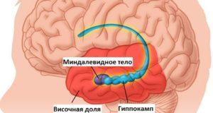 часть мозга отвечающая за память