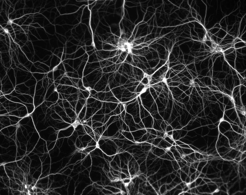 Сколько клеток в мозгу