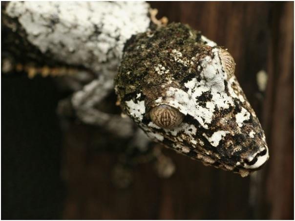 Рептилия меняющая кожу