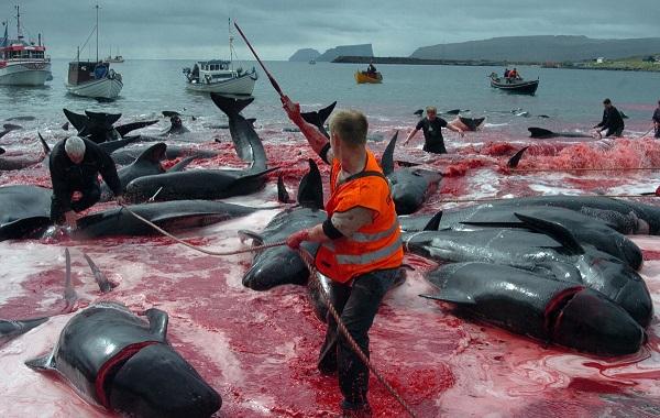 рыболовство фарерских