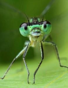 Мозги насекомых