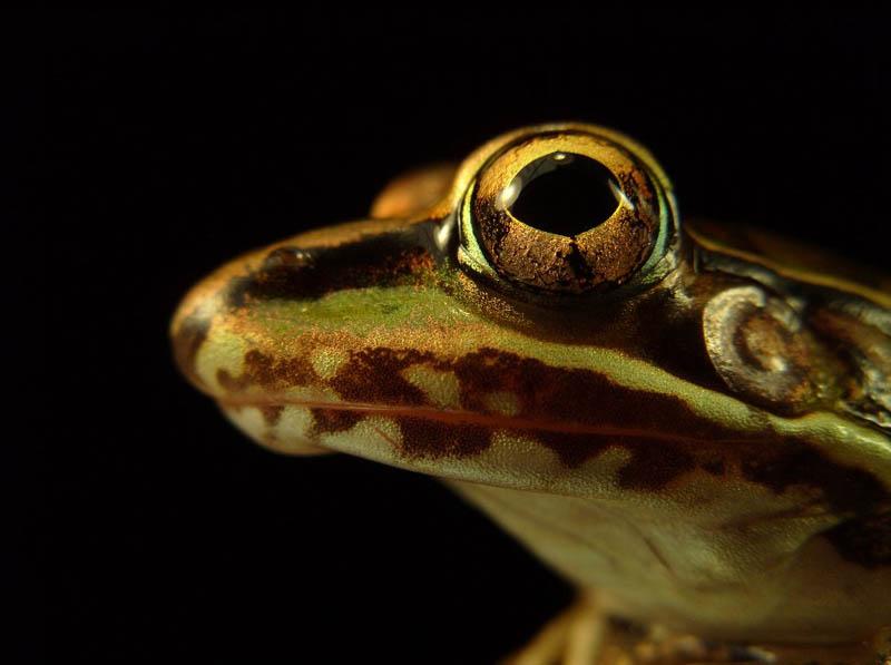 1216 Несколько фактов о лягушках