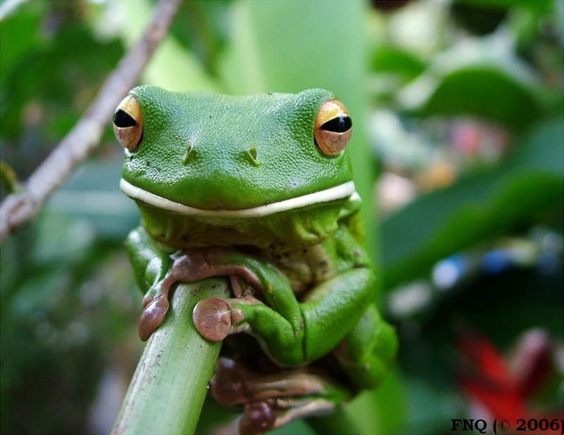 1411 Несколько фактов о лягушках