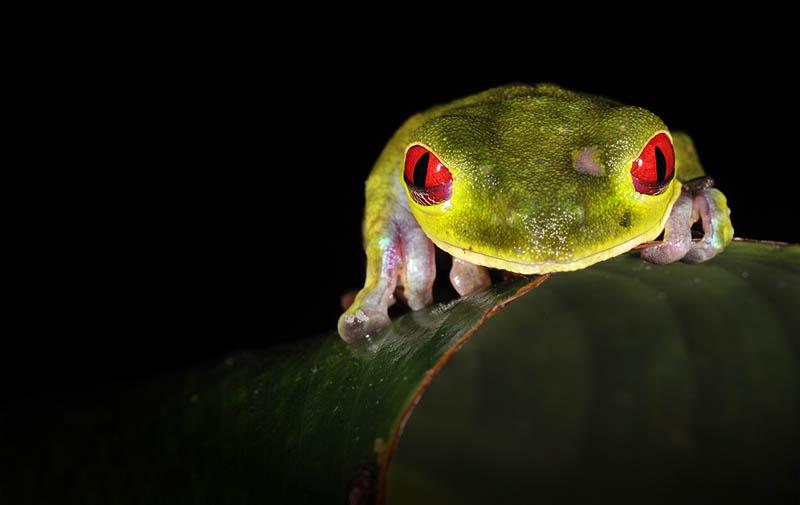 лягушки красивые
