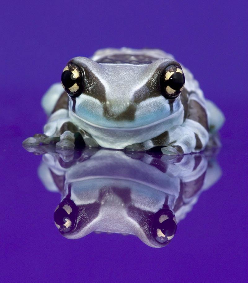 246 Несколько фактов о лягушках