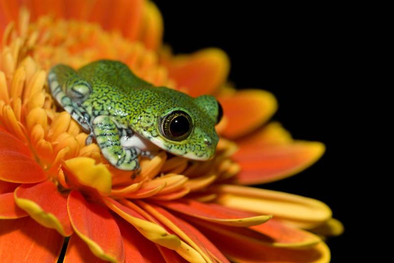 256 Несколько фактов о лягушках