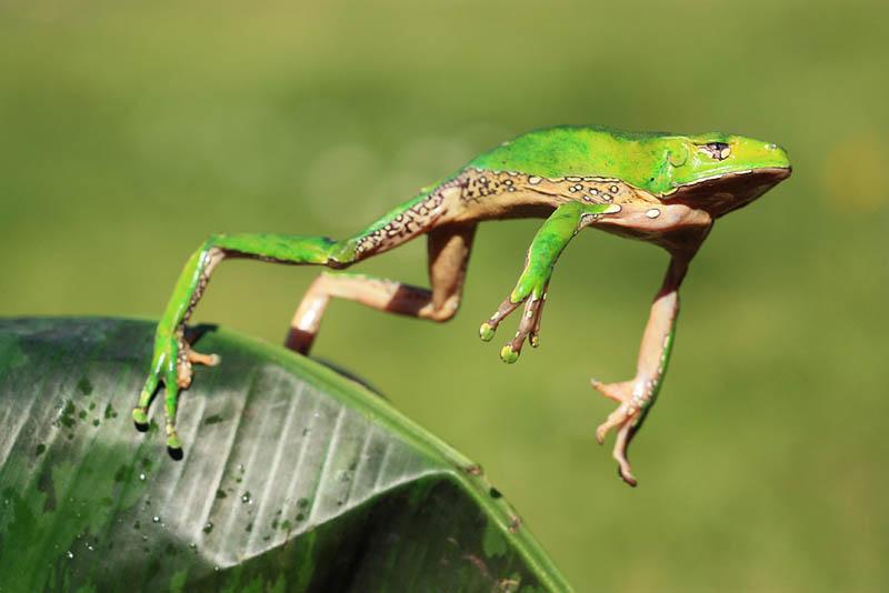 419 Несколько фактов о лягушках