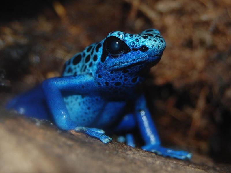617 Несколько фактов о лягушках