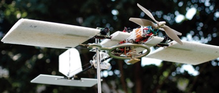 дроны как птицы
