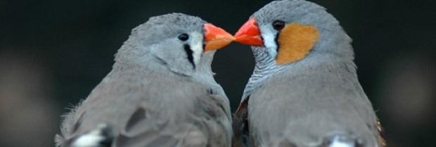 брачное поведение птиц