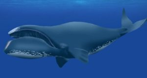 сколько живут киты
