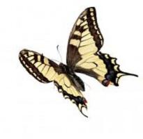 Сколько живут бабочки