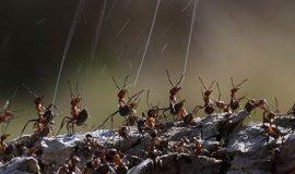 муравьиная кислота