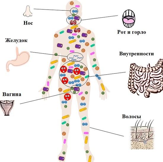 Сколько бактерий в человеке
