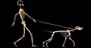 рентген животным