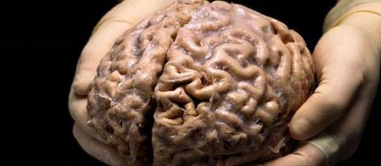 мозги человека