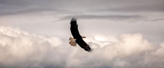 особенности орла