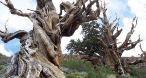 про деревья