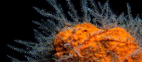 Как появились на Земле первые живые организмы