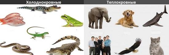 Холхолоднокровные животные