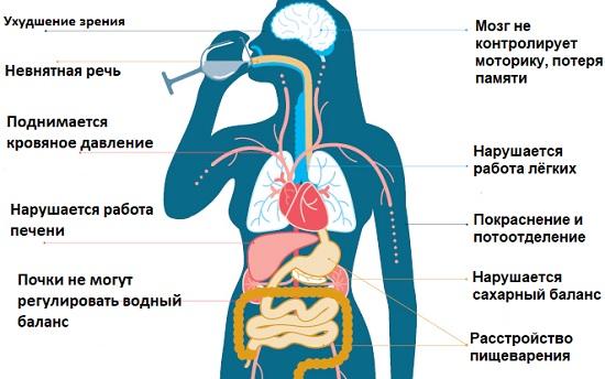 Действие алкоголя на организм