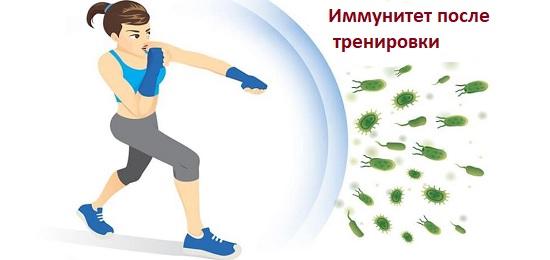 иммунитет после тренировки